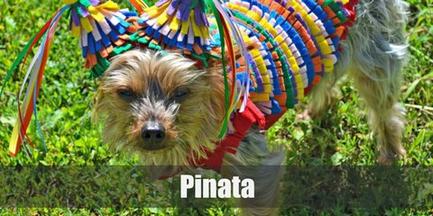 Pinata costume can be recreated with a cute unicorn hoodie decorated with hanging ribbons all over.