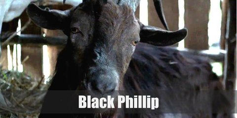 Black Phillip's costume includes a black goat mask, an all black outfit with long sleeved shirts and pants topped with a black cape. Wear gloves and carry a red book, too.
